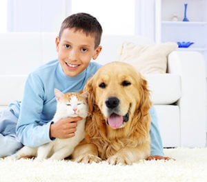 pet odor removal carpet cleaning in lafayette, in