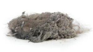 carpet cleaning vacuum dust